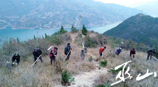 图为大溪乡干部职工在长江岸边植树。2.JPG