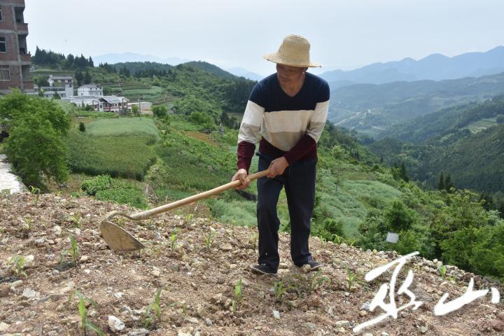 刘演海在地里劳作。.JPG
