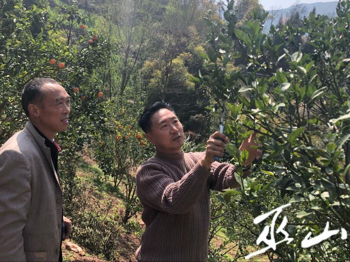 向绪林(右)深入田间地头为果农讲解果树管护知识.png