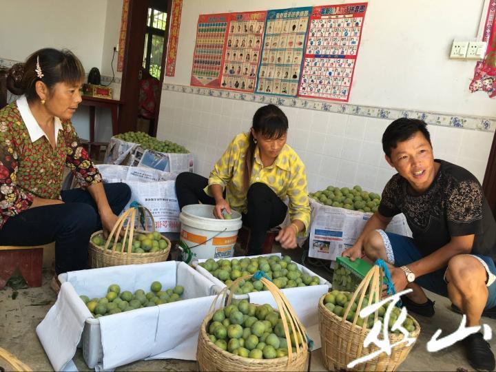 铜鼓镇龙湾村脆李上市,村民忙着将采摘回来的脆李打包。  记者 向君玲 摄.jpg