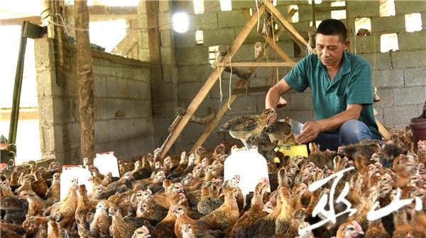 在鸡舍劳作。.JPG