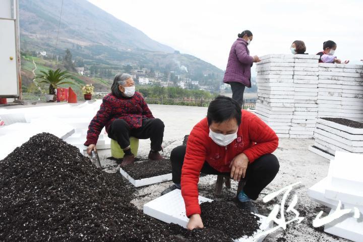 2月10日,巫山县巫峡镇蔬菜大棚育苗基地,人们戴着口罩在劳作。.JPG