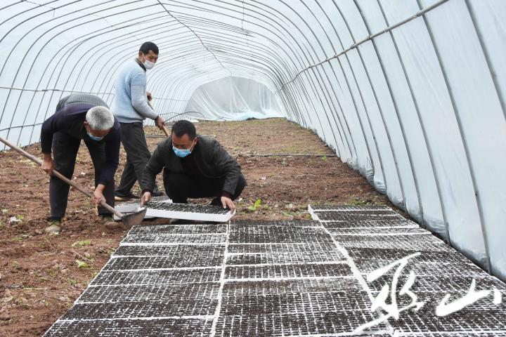 2月10日,巫山县巫峡镇蔬菜大棚育苗基地,人们戴着口罩劳作。.JPG